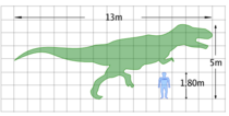 Size of a human compared to a Tyrannosaurus rex.