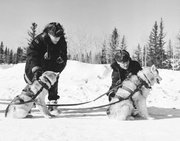 Royal Canadian Mounted Police (R.C.M.P.) hitching sled dogs into their harness