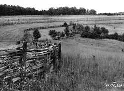 Timber agricultural fence (photo taken in 1938).