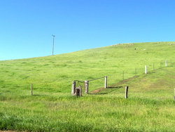 Fence dividing paddocks.